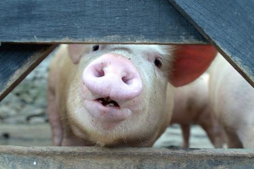A lei define que o selo será dado às empresas que não utilizarem animais em experimentos científicos