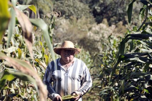 O agricultor Abílio dos Santos reduziu sua produção para 20%